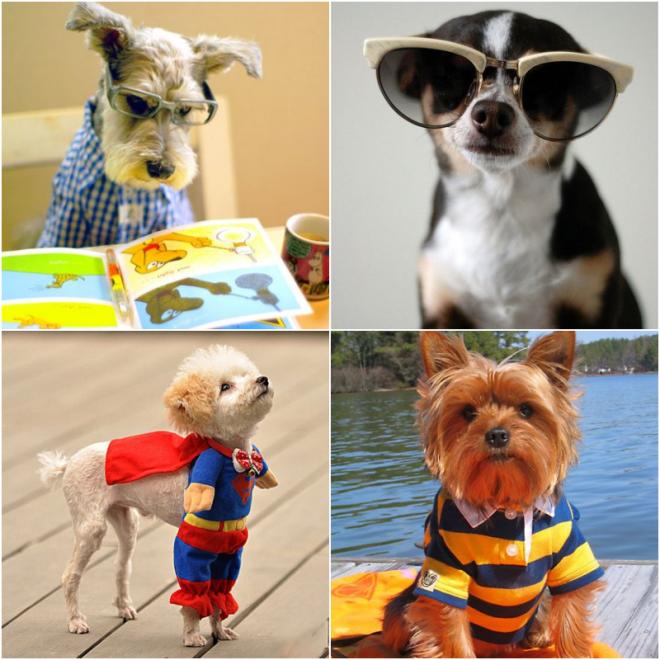Fashion dogs_1